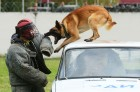 Training working dogs of the Russian National Guard