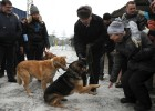 Liberal Democratic Party leader Zhirinovsky visits Red Pine dog shelter