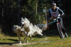 Russia Dog Mushing