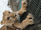 Russia Wild Animals Rehabilitation Centre