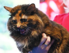 Russia Cats Show