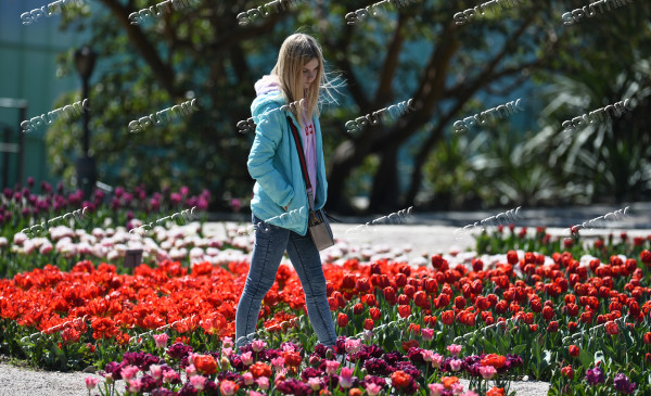 Russia Crimea Flowers
