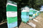Bee-farm in the Donetsk Region