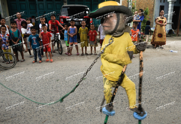 Indonesia Chained Monkey Show