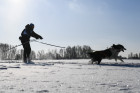 Russia Sled Dog Race