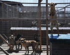 Russia Stray Dogs' Shelter