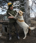 Shelter for homeless animals in Kiparisovo, Primorye