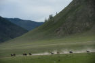 Traditional Altai Sport Games