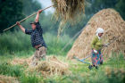Hay making in Omsk Region