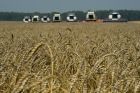 Grain harvest in Novosibirsk Region
