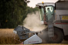 Harvesting wheat in Omsk region