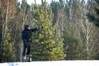 Christmas trees harvested in Trans-Baikal Territory