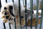 Moscow Zoo holds visiting tour