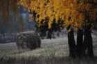 Autumn in Vladimir Region
