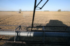 Harvesting wheat in Novosibirsk Region