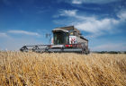 Wheat harvest in Krasnodar Territory